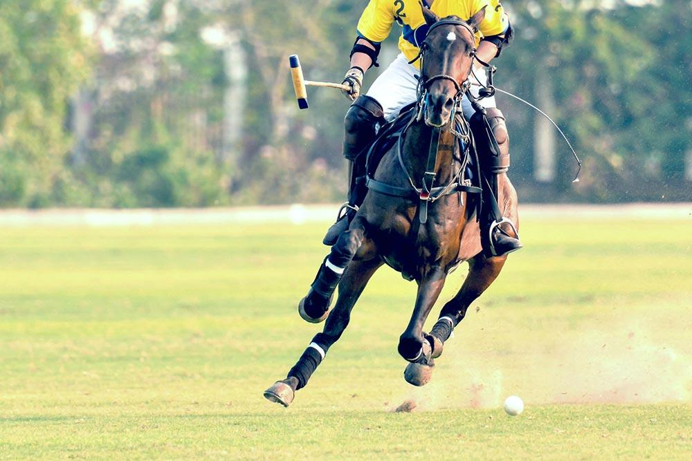 beverly-hills-polo-club-brand
